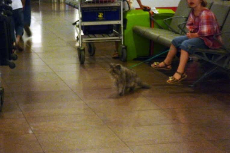 Cat in airport